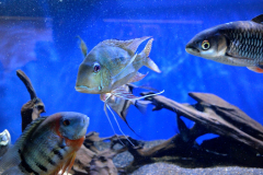Fish_07