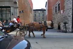Horses_08