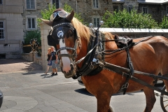 Horses_11