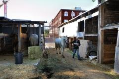 Horses_28