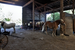 Horses_29