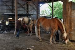 Horses_30