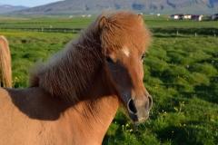 Horses_006