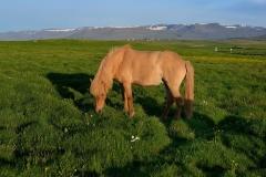 Horses_009