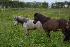 Horses_012