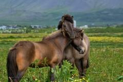 Horses_013