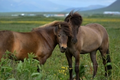 Horses_014