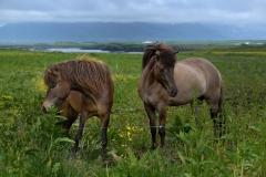 Horses_015