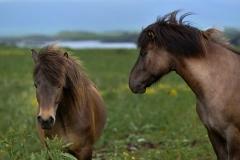 Horses_016