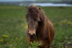 Horses_017