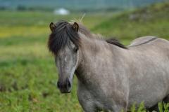 Horses_020