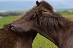 Horses_022