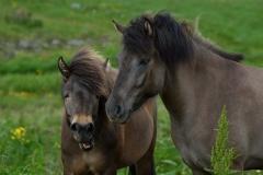 Horses_024