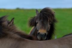 Horses_025