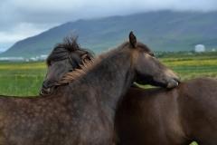 Horses_026