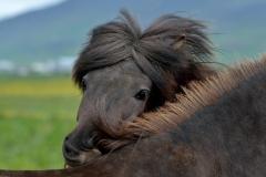 Horses_027