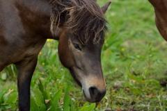 Horses_029