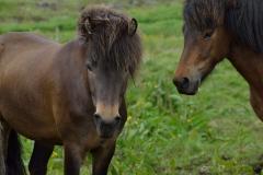 Horses_030