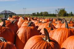 Pumpkins_14