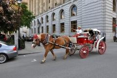 Horses_09