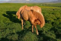 Horses_008