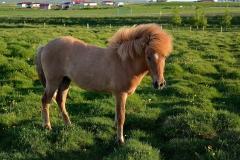 Horses_010