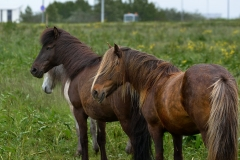 Horses_011