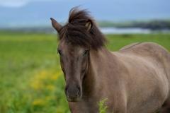 Horses_018