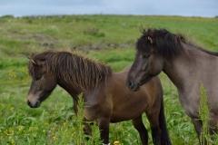 Horses_019