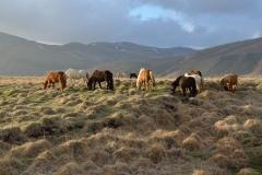 Horses_151