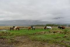 Horses_152